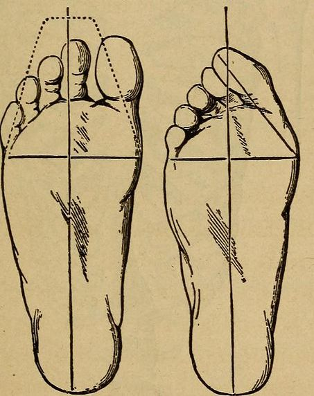Line drawings of the right foot, from beneath